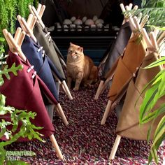 Wild times in these Adventure Tents by Tinker Trading Co. Cat Tent, Cat Hammock, Funny Animal Videos, Funny Animals, Adventure Cat, Pet Resort, Work With Animals, Cat Furniture, Diy Stuffed Animals