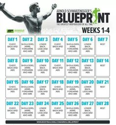 Arnold schwarzeneggers blueprint to cut fit pinterest workout from the man himself malvernweather Image collections