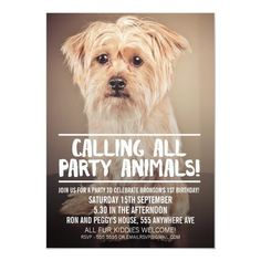 PET DOG'S PARTY PHOTO INVITE