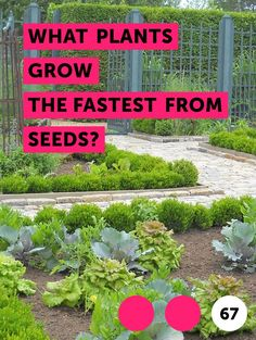 Learn How to Cover Grass Seed With Peat Moss Arborvitae Tree, Mealy Bugs, Blueberry Bushes, Asparagus Fern, Uses For Coffee Grounds, Growing Mushrooms, Lawn Sprinklers, Peat Moss, Grass Seed