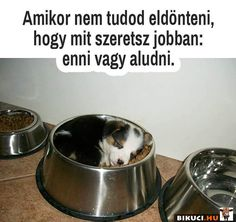 Ja csak én nem én nem férnék bele a tálba szép is volna 😂😂🤦 Animals And Pets, Cute Animals, Me Too Meme, Funny Pins, Dog Bowls, Funny Pictures, Jokes, Puppys, Beagle