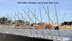We provide bird proofing solutions for industrial, commercial and residential places. Our anti bird net or pigeon protection net is made stainless steel which is durable in every weather. Our Bird netting or Pigeon netting stop them without harming them. Types Of Bugs, Types Of Insects, Horror Picture Show, Rocky Horror Picture, Pigeon Repellent, Keep Birds Away, House Insects, Bird Netting, Parking Design