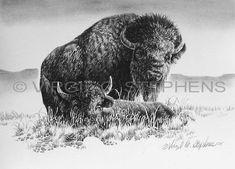 western art drawings | Buffalo, wildlife pencil drawing by western artist Virgil C. Stephens
