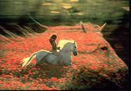 Robert Vavra - Stallion of a Dream
