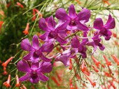 Resultado de imagen para orquideas hermosas en hd