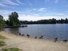 Beautiful Mill Lake Park in #Abbotsford BC https://www.yd.com/Abbotsford/default.aspx