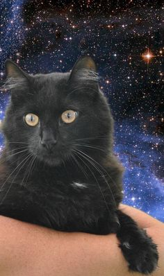Buddy is one of three rescued from an undesirable situation.  He's up to date on vaccines and litter box trained. He very calm ad laid back.   He's great with small dogs too! First time at the vet and he was as cool as a cucumber. Nothing seems to...