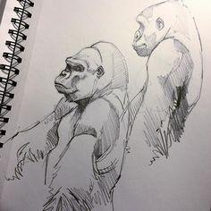 Gorillas popping up everywhere. #pencil #sketch #sketchbook #sketching #sketches #draw #drawings #drawing #draweveryday #drawingismylife #gorillalife #animalkingdom #animallover #animaldrawing #wildlife #wildlifelover #wildlifelovers #endangeredspecies #graphite #blackandwhite