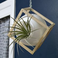 Turn a discarded light globe into a modern air plant hanger!