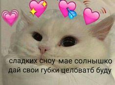 Cute Cat Memes, Cute Love Memes, Funny Memes, Jokes, Cute Backgrounds For Iphone, Hello Memes, Grabity Falls, Happy Memes, Russian Memes