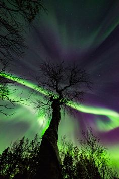 "etherealvistas: "" Aurora and Tree (Norway) by Kolbein Svensson 