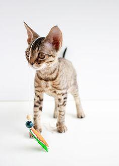 Entertain your feline friends: DIY Feathered Cat Toys   www.highwallsblog.com