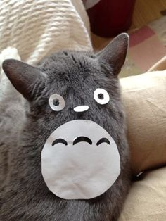 How to Turn Your Cat into Totoro . Some Japanese person turned their cat into Totoro by doing arts and craft on its back! Cute Cats, Funny Cats, Funny Animals, Cute Animals, Gatos Cool, Son Chat, Matou, My Neighbor Totoro, Grey Cats