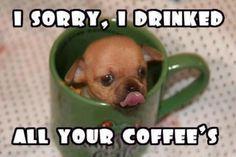 Coffee cup chawawa haha naughty puppy.