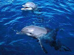 Cute & Surprising Animal Facts. Sabías que los delfines tienen específicos nombres entre ello mismos?