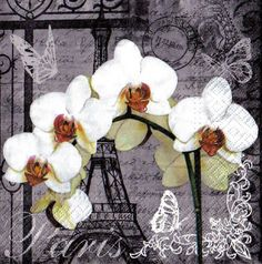 zvetsit fotografii - Napkin 33 x 33 cm Stencil, Grace And Lace, Party Napkins, White Orchids, Decoupage Paper, Free Paper, Mixed Media, Floral Wreath, Collage