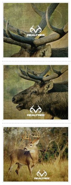 Tanner Renoux is awsome Hunting Camo, Hunting Stuff, Hunting Girls, Hunting Wallpaper, Camo Wallpaper, Elk Horns, Real Tree Camouflage, Camouflage Patterns, Camo Colors