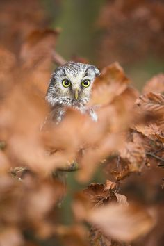 I like this pic. The way only the owl is in focus is evocative for me.