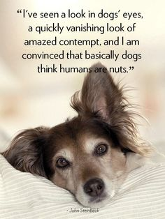 Funny and cute dog quotes and sayings with beautiful pictures and images. Famous dog quotes on life, love and family and the happiness of a dag's life. Cute Dog Quotes, Cute Animal Quotes, Cute Animal Videos, Pet Quotes, Friend Quotes, Puppy Quotes, Dog Sayings, George Strait, Funny Dogs