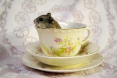 The Doormouse invites you for tea! :)