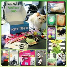 21.04.16. Here is an presentation of #180 of April,s box  from  @kattbox_se * Cat-grass * Ball's ⚾⚽ * Rat's  * Kong- cork with feather ⚾ * Green tail -chaiser  * Caticure scissor ✂ * Cat-food chicken breast with  pumpkin, and with asparagus * Birdtoy  * Milky * Liquid - snack  We also will say:  Congratz to the month cat  pic  @maalinalexandra  #180miniophoenix #kattbox #kattbox  Källa: https://www.instagram.com/p/BEd1cg-okMQ/