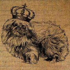 Pekingese Crown Dog Royal Digital Image Download Sheet Transfer To Pillows Tote Bags Tea Towels  Burlap No. 1514 Pekingese Puppies, Fu Dog, Baby Dogs, Doggies, Dog Photos, Digital Image, Tea Towels, Mammals, Animals And Pets