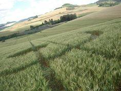 A travers la planète, des centaines de «crop circles» ont été reportés. La plupart de ces motifs, perçus comme un canular, ne sont pas pris au sérieux. htt