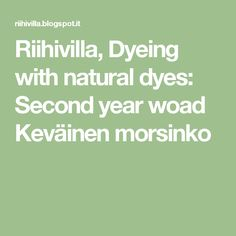 Riihivilla, Dyeing with natural dyes: Second year woad Keväinen morsinko