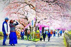Цветение сакуры. Экскурсионный тур в Японию с авиаперелетом на 27 марта 2017