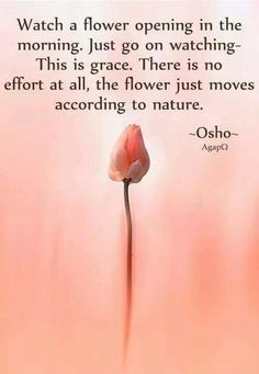 180 Best Osho Quotes on Love, Life and Happiness Osho Quotes On Life, Wisdom Quotes, Positive Quotes, Positive Vibes, Reality Quotes, Nature Quotes, Positive Affirmations, Spiritual Thoughts, Spiritual Wisdom