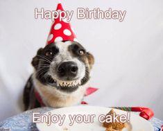 20 Best Happy Birthday Dog Meme Images Happy Birthday Dog Happy Birthday Meme Happy Birthday Dog Meme