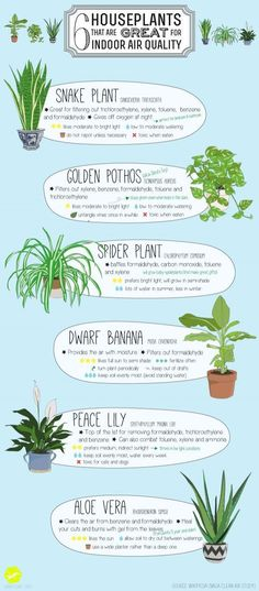6 houseplants that are great for indoor air quality