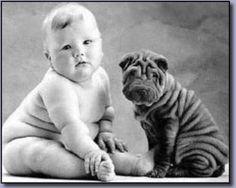 Köpek Resimleri-Dog Pictures