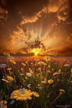 Science Discover Sunset in Flower Field Marvelous Nature Beautiful World Beautiful Places Landscape Photography Nature Photography Landscape Pics Sunrise Landscape Travel Photography Beautiful Sunrise Nature Pictures Amazing Sunsets, Amazing Nature, Beautiful World, Beautiful Places, Landscape Photography, Nature Photography, Travel Photography, Beautiful Sunrise, Nature Scenes