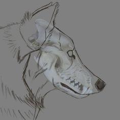 #wolf #aaronblaise #anatomy #wolfanatomy A A Ron, Animal Anatomy, Fantasy Art, Wolf, Nature, Animals, Naturaleza, Animales, Fantastic Art