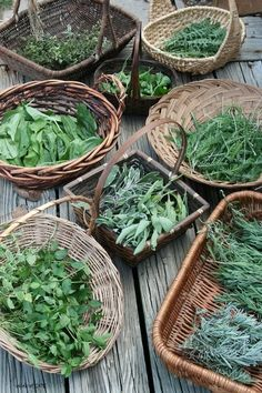 wild and cultivated yarrow, chocolate and pineapple mint, regular and variegated sage, marjoram and calendula :: baskets