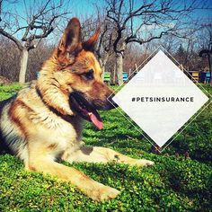 Would you believe me if I say your pet won't get sick? No right.  Well, i have great news. Your pet insurance is worth millions. Don't let you and your pet suffer by random trips to the vet.  As low as 15 dollars a month! . . . #petsinsurance #sandiego #lajolla #chulavista #oceanside #escondido #elcajon #encinitas #coronado #vista #sanmarcos #delmar #solanaBech #imperialbeach #lemongrove #camarillo #oxnard #ventura #thousandoaks #westlake #malibu #carlostiscarenofarmers…