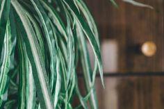 Green Plant — PixaSquare | Free Hi-Res Stock Photos
