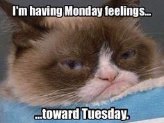Grumpy Cat on Pinterest  Funny Grumpy Cats, Grumpy Kitty and Meme