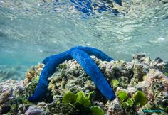 Microworlds: Back from rainy Great Barrier Reef - some wildlife ...