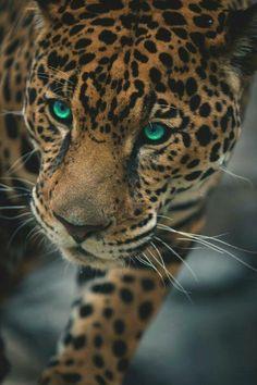 Animal inspo