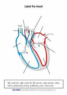 Label the heart worksheets (SB6634) - SparkleBox