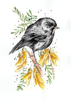 This cute little NZ Robin (Toutouwai) is nestled nicely among some Kowhai flowers with his lunch. This piece is created using watercolour, ink and a little acrylic. New Zealand Wildlife, Bubble Bird, Watercolor Paintings, Watercolour, Marine Life, Robin, Qoutes, Birds, Ink