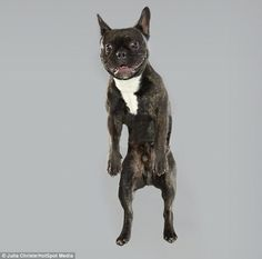 A Fun Photo Series Of Dogs Doing Jump Shots DesignTAXIcom - Hilarious photographs dogs floating mid air