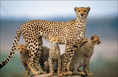 Family pride added by © epiphannyy, via  Pixdaus.com