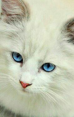 Magnifique yeux bleus