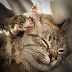 Cat. Kitten.