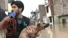 A Peruvian reporter recently performed the kindest act when he stopped his live coverage of a flood to rescue a dog who nearly drowned frantically looking for a dry spot. According to the Asian Age, Aaron Rodriguez had been in front of the camera reporting on flood conditions for the publication Latina Noticias, when he …
