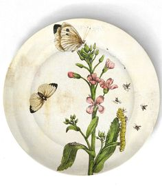 1600's botanical artwork I reproduced on 10 by TheMadPlatters, $18.00