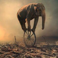 Surreal images created by Romanian Photoshop artist Caras Ionut Image Elephant, Elephant Love, Elephant Art, Photoshop, Elephants Never Forget, Elephant Illustration, Photo D Art, Surrealism Photography, Surreal Art